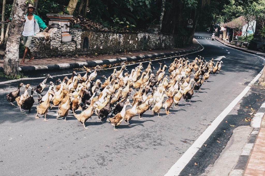 Ubud Bali Indonesia Travel Blog