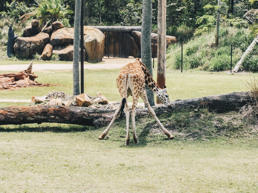 Brisbane Australia Zoo Travel Blog