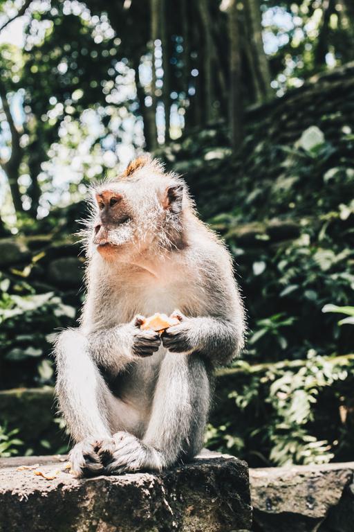 Bali Ubud Travel Blog