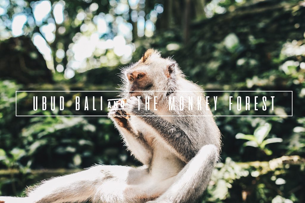 ubud_bali_monkey_forest_travel_blog
