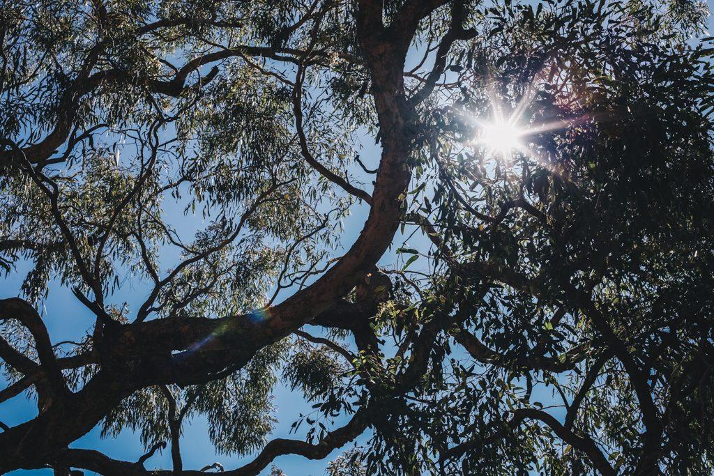 Ayres Rock Uluru Australia Travel Blog